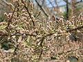 Plants in Donetsk 135.JPG