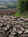 Plough, Brokerswood - geograph.org.uk - 1286120.jpg