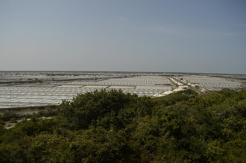 File:Point calimere salt pans JEG7136.jpg