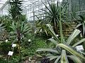 Poland. Warsaw. Powsin. Botanical Garden 144.jpg
