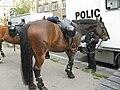 Policejní kůň v Ondříčkově.jpg
