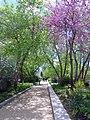 Pollinator Garden in April (17427439130).jpg