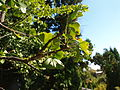 Poltava Botanical garden (85).jpg