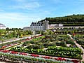Potager du château de Villandry 13.JPG