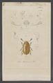 Pria - Print - Iconographia Zoologica - Special Collections University of Amsterdam - UBAINV0274 017 06 0057.tif
