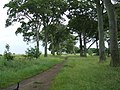 Public Footpath Through The Rookeries - geograph.org.uk - 862302.jpg