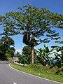 Puerto Galera - Nautical Western Hwy - panoramio.jpg