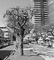Purim Monring, Rothschild Boulevard P1130254.JPG