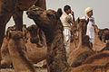 Pushkar, Rajasthan - India (15450437123).jpg