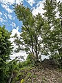 Quackenschloss Baum 7038978.jpg