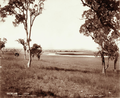 Queensland State Archives 3931 Black Swan Lagoon Canning Downs Station near Warwick 7 May 1894.png