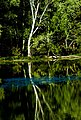 Radnor Lake, Nashville, tn - panoramio.jpg