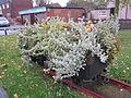 Railway wagon planter, Shevington (2).JPG