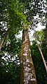 Rain forest 12.jpg