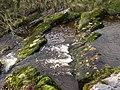 Rapids, Otterburn - geograph.org.uk - 619150.jpg