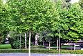 Ravensburg Alter Friedhof von Westen.jpg