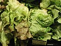 Red butter lettuce.jpg