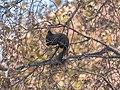 Red squirrel P1666218 (49119509097).jpg