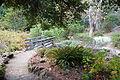 Regional Parks Botanic Garden - Berkeley, CA - DSC04545.JPG