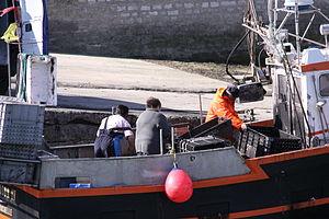 Retour de la pêche à la seiche du fileyeur Jason IV (10).JPG