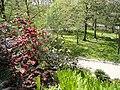 Rhododendron thomsonii - University of Copenhagen Botanical Garden - DSC07473.JPG