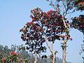 Rhododendron tree 06.jpg