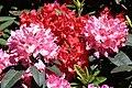 Rhododendronpark Bremen 20090513 118.JPG