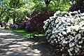 Rhododendronpark Bremen 20090513 130.JPG