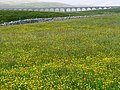 Ribblehead Viaduct from Hawes House - geograph.org.uk - 1382437.jpg