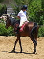 Riding a Horse Backwards 1110828.jpg