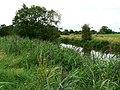 River Avon, near Upper Seagry - geograph.org.uk - 914352.jpg