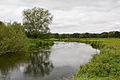 River Avon, south of Harbridge - geograph.org.uk - 1465214.jpg