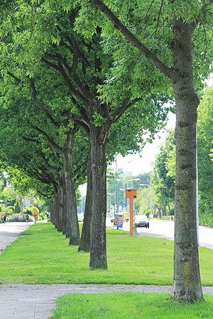 Drachten - Road green
