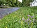 Roadside flora - geograph.org.uk - 471685.jpg