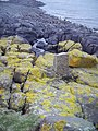 Rocky Foreshore, Cramond Island - geograph.org.uk - 365923.jpg