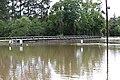 Roman Forest Flood - 4-18-16 (26419802012).jpg