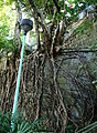 Root of a Tree.JPG
