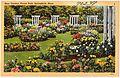 Rose gardens, Forest Park, Springfield, Mass (70237).jpg