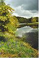 Rowe's Flashe, Winkworth Arboretum. - geograph.org.uk - 136580.jpg