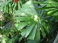 Royal Botanic Gardens, Sydney 08.JPG