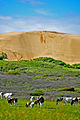 Rubjerg Knude - sand drift.jpg