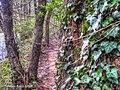 Rug pe copac traseul cheile nerei - panoramio.jpg