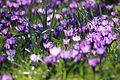 Rustenborg spring flowers.jpg