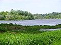 Rzeka Bug k-Nura - panoramio.jpg
