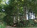Süchtelner Höhen 3 (2006).jpg