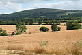 Sampford Courtenay, towards Cosdon Hill - geograph.org.uk - 207623.jpg