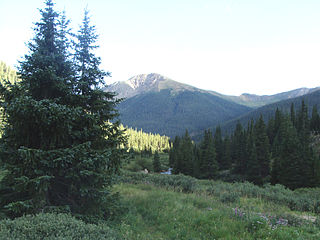 Forest in Colorado, US