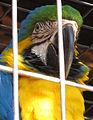 Santiago, behind bars (9155556080).jpg