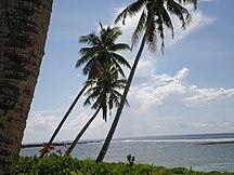 Vaisigano--Savai'i coastal scenery palm trees & sea, Falealupo village, Samoa 1
