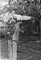 Scarecrow in Livingston Parish Louisiana 1930s.jpg